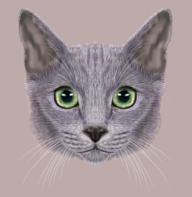 Quadro De Ilustração - retrato, russo, azul, gato. Gato doméstico bonito com olhos verdes.