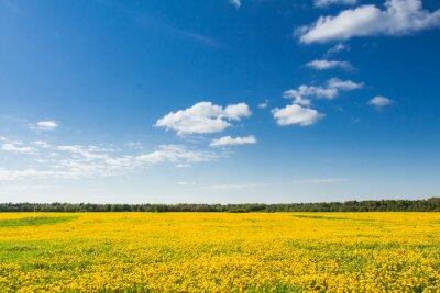Quadro De-leão amarelo contra o céu azul.