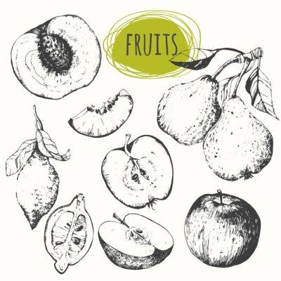 Quadro Descrição da ilustração: Jogo da mão - maçã desenhada, limão, pera, pêssego. Esboce frutas.