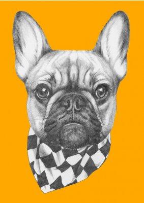 Quadro Desenho original de Bulldog Francês com lenço. Isolado no fundo colorido
