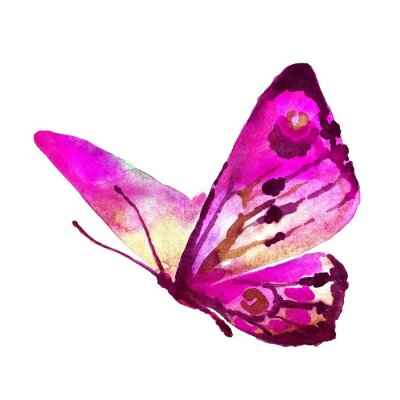Quadro design de borboletas