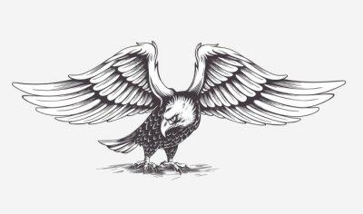 Quadro Detailed Hand Drawn Eagle. Vector.