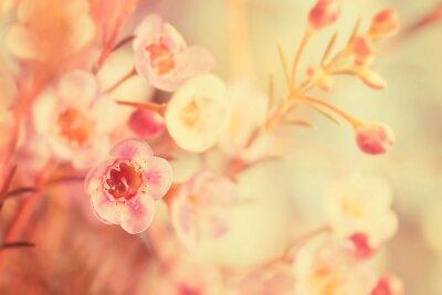Quadro Doce, tom, macio, foco, flor