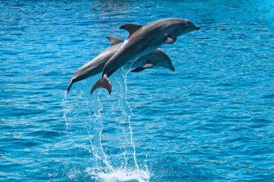 Quadro Dois golfinhos saltar acima da água azul