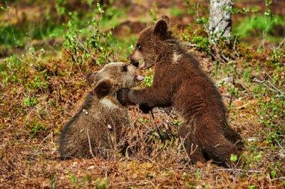 Quadro Dois, marrom, urso, filhotes