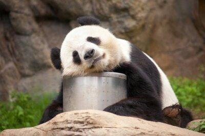 Quadro Dormir Panda