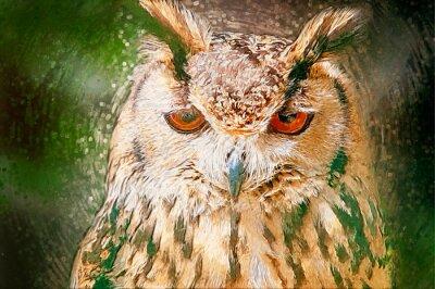 Quadro Drawn Owl Portrait