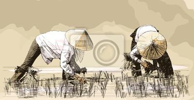 Quadro Duas mulheres que colhem arroz na Ásia