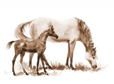 Quadro Égua e potro da aguarela do Sepia no branco. Ilustração pintada mão bonita de dois cavalos no campo.