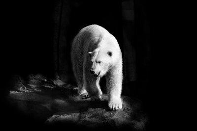 Quadro Eisbär in Schwarzweiß
