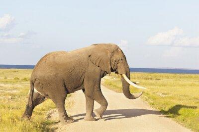 Quadro Elefante africano no Quênia