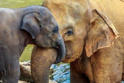 Quadro elefante e bebê elefante