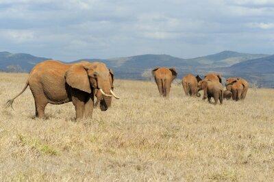 Quadro Elefante, nacional, parque, kenya