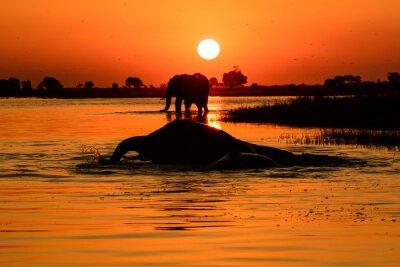 Quadro Elefante, pôr do sol