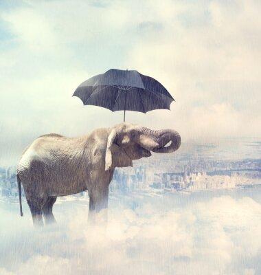 Quadro Elefante que aprecia a chuva avobe da cidade sobre as nuvens