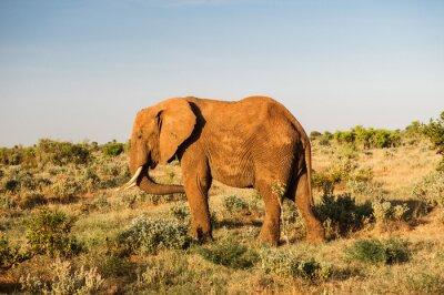 Quadro Elefante, Tsavo, leste, nacional, parque, kenya