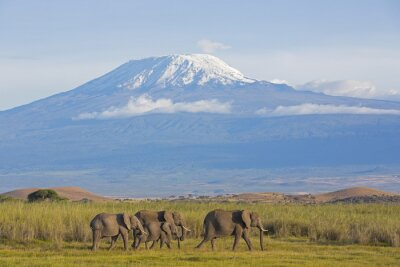 Quadro Elefantes com Kilimanjaro