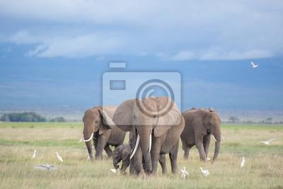 Quadro elefantes em Amboseli / família