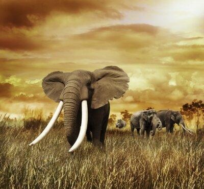 Quadro Elefantes no por do sol