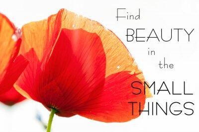 Quadro Encontre beleza nas pequenas coisas. Citação inspiradora da motivação