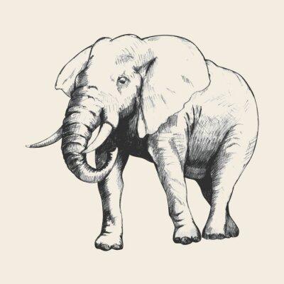 Quadro Esboço do elefante