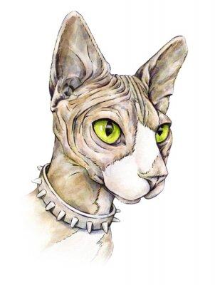 Quadro Esfinge canadense em um colar com espinhos. Gato despido em um fundo branco. Desenho de aquarela