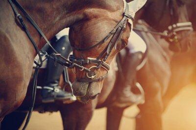 Quadro Esportes cavalos marrons antes das competições.