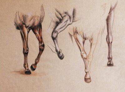 Quadro Estudo de pernas de cavalo