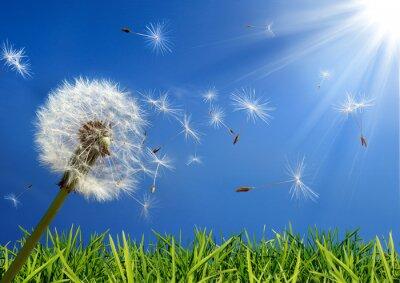 Quadro exclusivo - alergia conceito na Primavera