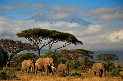 Quadro Família do elefante na frente do Monte. Kilimanjaro