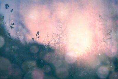 Quadro Fantasia do sol bokeh de fundo desfocado prado