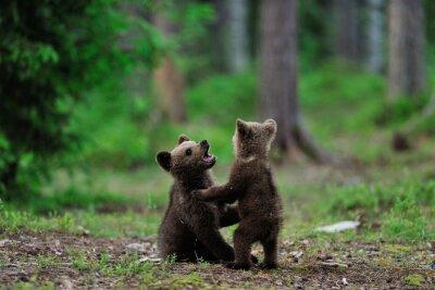 Quadro Filhotes de urso de Brown que jogam na floresta