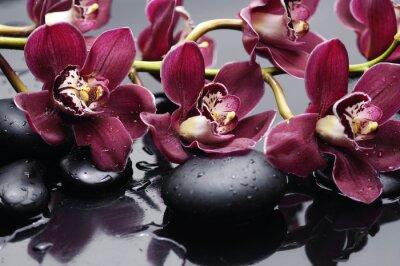 Quadro filial da orquídea vermelha com pedras da terapia