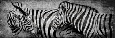 Quadro Fim, cima, zebras, pastar, seco, prado