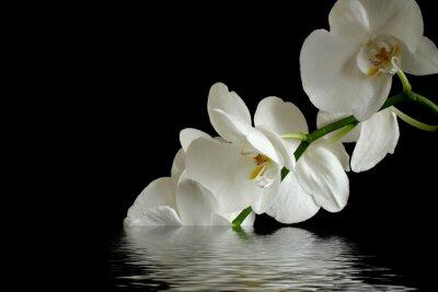 Quadro flor da orquídea reflexão