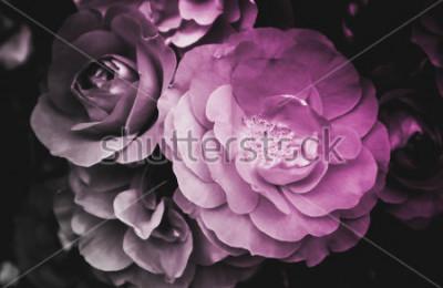 Quadro Flor de florescência da flor cor-de-rosa bonita. A foto descreve o arbusto cor-de-rosa selvagem brilhante delicado da flor. Close-up, visão macro. Preto e branco
