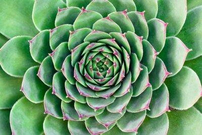 Quadro flor verde