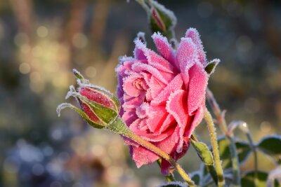 Quadro flores 529
