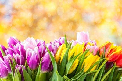 Quadro Flores bonitas da tulipa