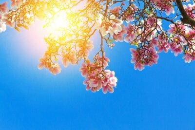 Quadro flores de magnólia no sol