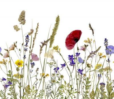 Quadro Flores e ervas