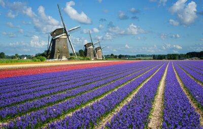 Quadro Flores e Moinhos de vento em Holland