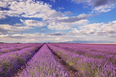Quadro Florescendo, campos, lavanda, Provence, sulista, França