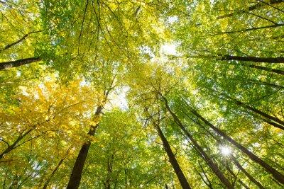 Quadro floresta