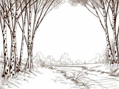 Quadro Floresta árvore Birch, fundo gráfico