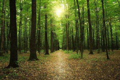 Quadro Floresta com luz solar