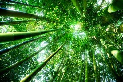 Quadro floresta de bambu - conceito zen