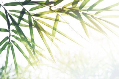 Quadro Floresta de bambu ou folhagem de bambu e luz solar e espaço para texto