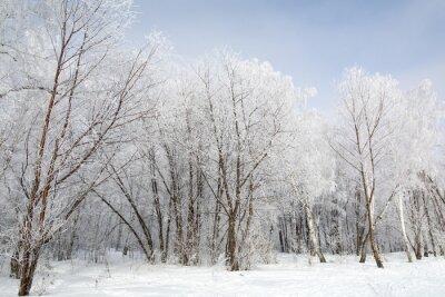 Quadro Floresta de inverno