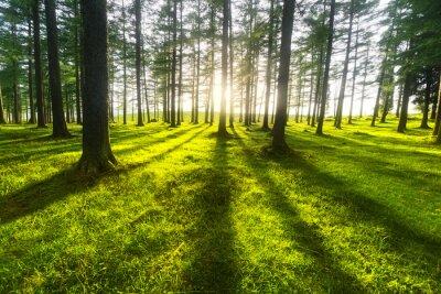 Quadro floresta ensolarada